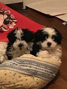 Heavenly's Puppies