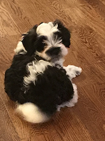 Heavenly Available Puppies!