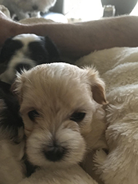 Puppies Available we have girls and boys!